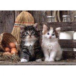 Puzzle 1000 pièces - Lovely kittens