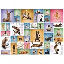 Puzzle 1000 pièces - Yoga Cats